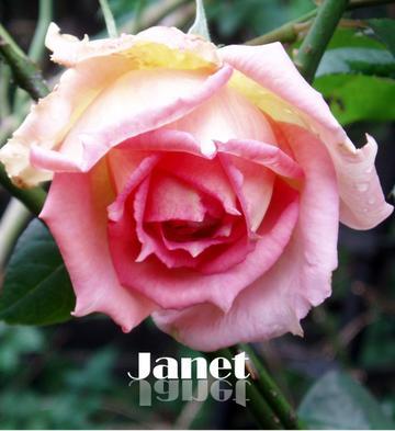 Janet2pb072897_convert_200811171736