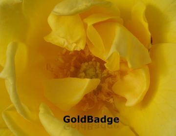 Goldbadge2pb182959_convert_20081118