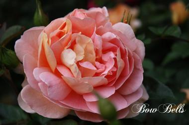 Bowbellsimg_0311_convert_2009051718