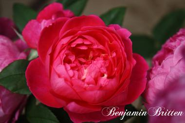Benjaminbrittenimg_0489_convert_200
