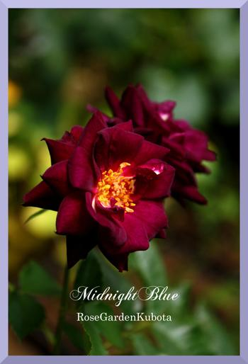 Midnightblue2img_0666_convert_200_3