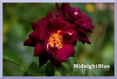 Midnightblue4img_0662_convert_200_2