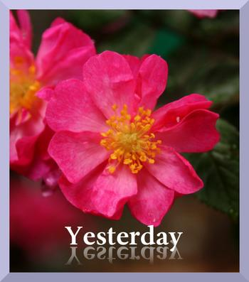 Yesterday4img_0600_convert_20090605