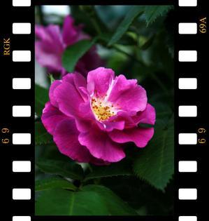 Film_convert_20090626194646