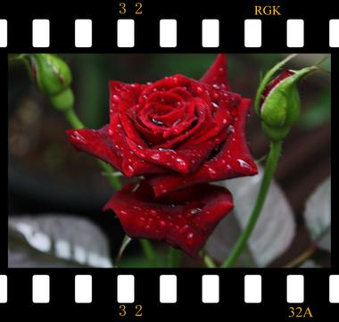 Film2_convert_20090702193459
