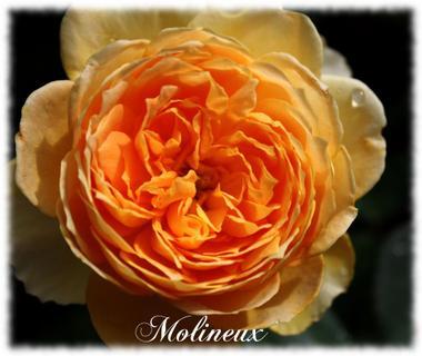 Molineux2convert_20091004184322